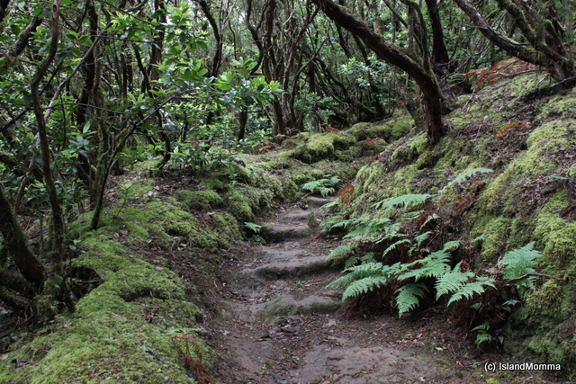 """Anaga Forest in Tenerife"""