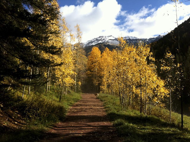 """Fall colors in Colorado"""