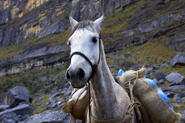 """Ran into this horse carrying a load of potatoes. It was led by natives - on their way to a very remote mountain village"""