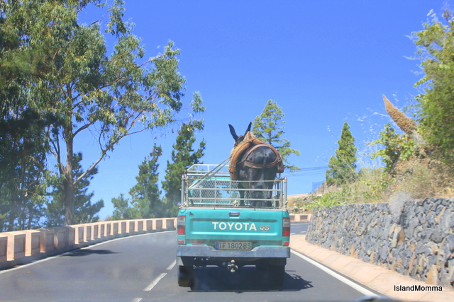 """Island life in Tenerife: burro in a truck, old and new forms of island transportation"""