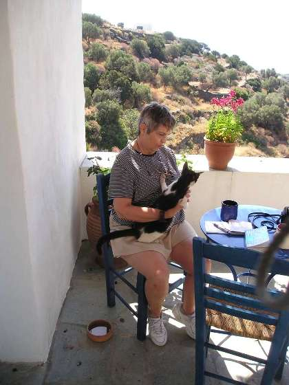 """Kitty-in-residence as we gazed out over olive  trees and the blue Aegean on the island of Siphnos in Greece"""