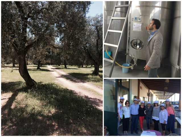 Olive harvest and tour of mill in Puglia - Photos by Victoria De Maio